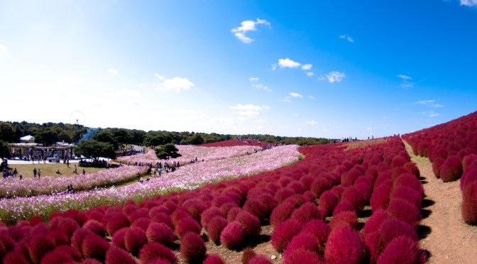Ike ike Japan ! Le Seaside Park de Hitachi