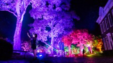 TeamLab, Resonating Trees, Photographie de l'installation.