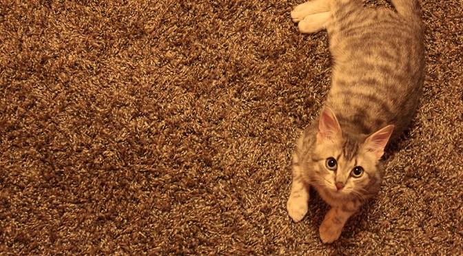 Webmaster à chat !