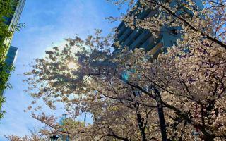 春の過ごし方–3月4月の節気–/さえ - 恵比寿ヨガスタジオ studio GOD -