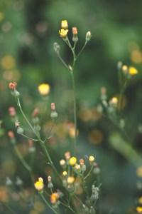 Blumenwiese Gartenfotografie