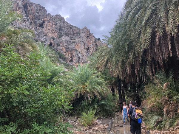 Palm Forrest Trail