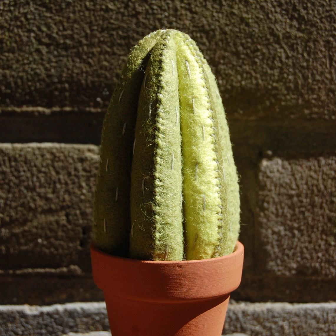 groene hoge cactus maken