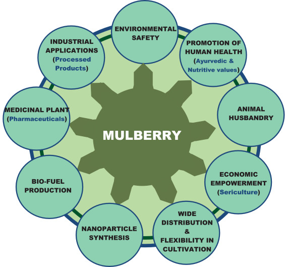 Fig. 1. Role of mulberry as a multipurpose plant.