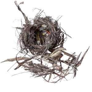 image of empty nest