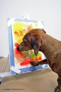 ammo the dachshund artist