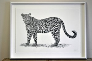 The Studio Art Gallery - African Leopard Framed by Craig Ivor