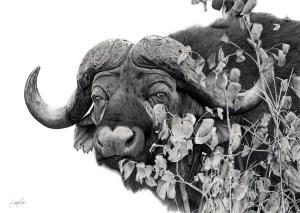 The Studio Art Gallery - Cape Buffalo in Shrub Mopani by Craig Ivor
