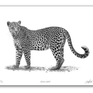 The Studio Art Gallery - Paper Print - African Leopard