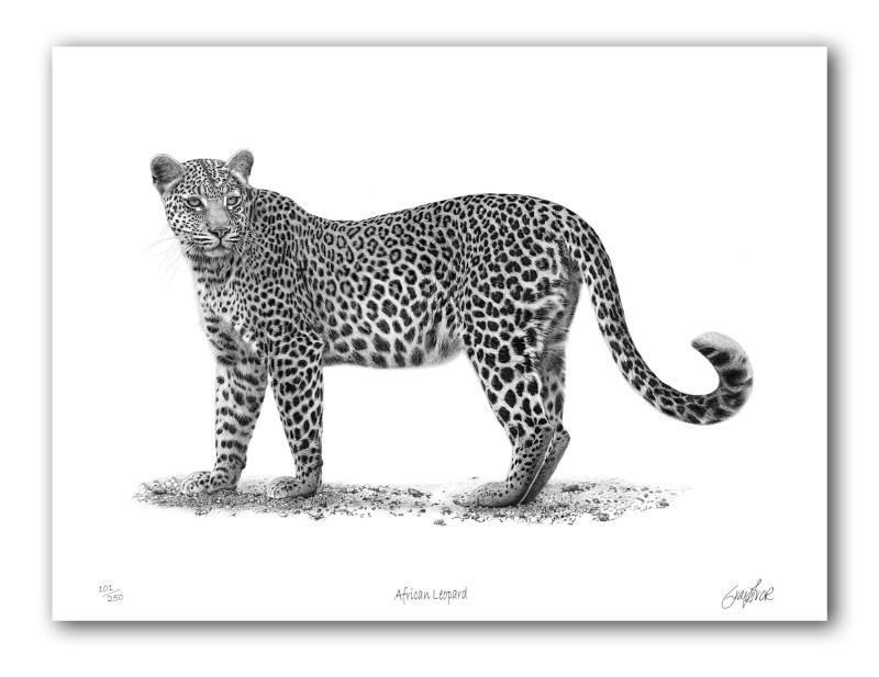 The Studio Art Gallery - Paper Print - African Leopard