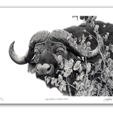 The Studio Art Gallery - Paper Print - Cape Buffalo in Mopani Shrub