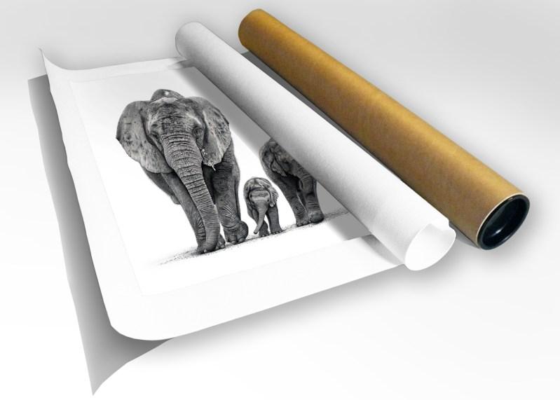 The Studio Art Gallery - African Elephants - Print in Tube