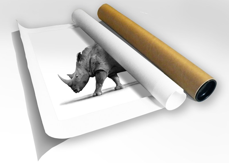 The Studio Art Gallery - Print in Tube - White Rhino with Ox Peckers