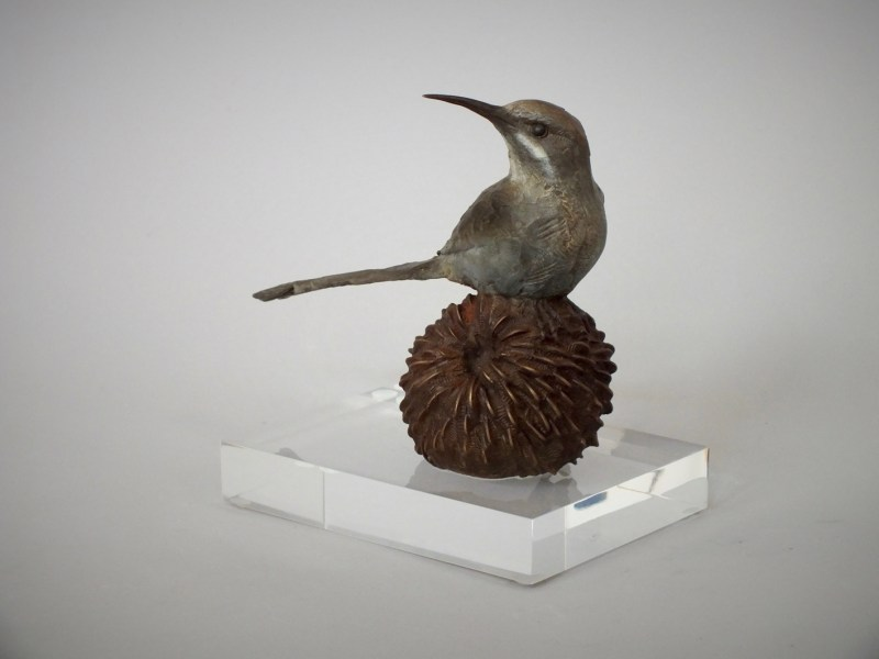 The Studio Art Gallery - Sculpture - Sugarbird on Pincushion by Chris Bladen (1)