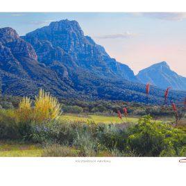 Andrew Cooper | The Studio Art Gallery - Kirstenbosch Gardens Limited Edition Print