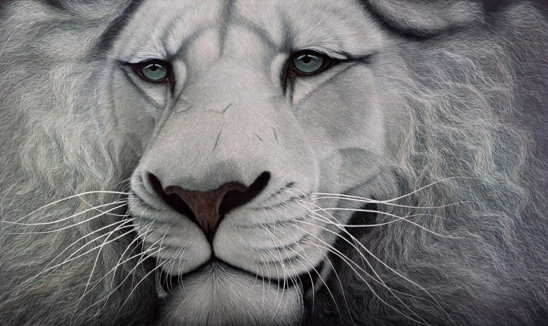The Studio Art Gallery - White Lion by Marc Alexander