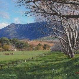Andrew Cooper | The Studio Art Gallery - 'Cows Grazing, Buitenverwachting,' 40cm by 28cm, Acrylic on Canvas