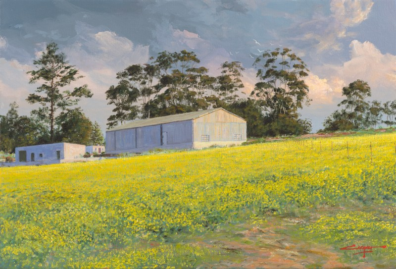 Andrew Cooper | The Studio Art Gallery - Canola Fields Overberg, Acrylic on Canvas, 60cm by 40cm
