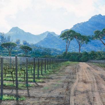 Studio Art Gallery   Andrew Cooper   Wintervines, Groot Constantia