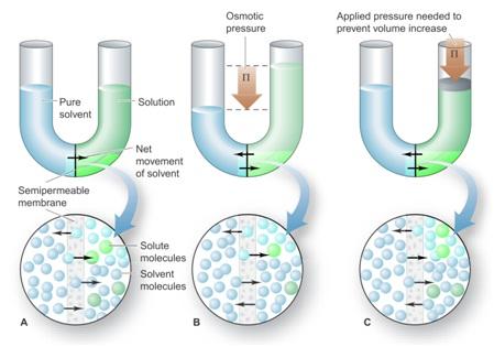 sifat koligatif larutan osmosis