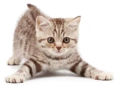 Immagine di un piccolo gatto