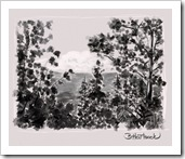 Barb Hartsook - Forest Drawing