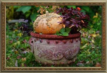 "Galeuse d'Eysines (aka the ""Peanut Pumpkin"" )"