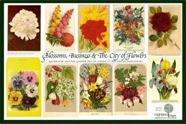 Blossom, Business and The City of Flowers (2009)