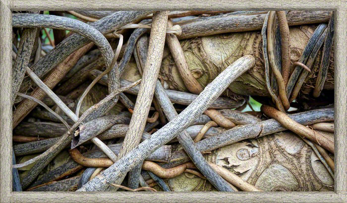 Root Wars I