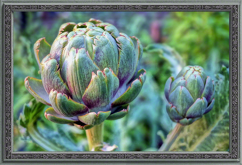Artichokes in the Field: Community Garden Wide Waters