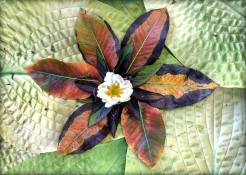 """As the real summer stars give way to those of fall, the same happens in my #FantasyUniverse of Celestial Vegetables. Here then is the """"Autumn Pear Leaf Star"""". Autumn Leaves of an ancient pear tree and Thai Basil. Japanese Anemone , Hostas """"Chesterland Gold"""" and """"Jewel of the Nile"""". Plus the pollen dust of Spearmint."""