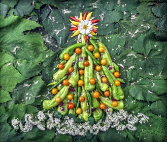 Tis the season for snow in the Edible Universe, which means falling flowers of garlic chive and the petals of choke and bract from an Artichoke, so many that these are drifting under the Pepper Tree. The tree consists of Cubanelle and Green Cayenne peppers trimmed with Sungold Tomatoes, Christmas Lima Beans and Thai Basil Flowers. At top, the Holiday Star has come to rest - Hot Lemon and Rooster Spur peppers frame a core made from a Japanese Anemone flower and pearl like bract pedals also remnants of an Artichoke in bloom. Resting in a background universe of grape leaves and Afina Cutting Celery