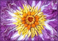 """This star shines from its central core outward. with Marigold """"Alumia Red"""", a wild Pumpkemon, Pepper """"Numex Suave Orange"""" and many bright rays of Pepper Ecuadorian """"Hot Lemon"""". An equally blazing corona of Red Napa Cabbage surrounds the sun with the background space consisting of flowering Kale. Grow Your Own Palette!"""