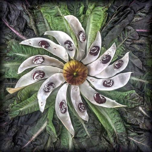 """The most beautiful seeds in my garden come from a heritage pole bean called: """"Large Speckled Calico Lima Bean."""" With a stellar core of husked """"Purple Tomatillo"""", this ancient sun is swirling in a nebula of """"Bronze Red Romaine Lettuce. """" Or so it is in my Mind's Eye which so often peers into the Edible Universe."""