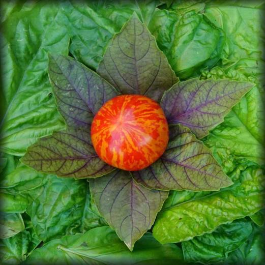 "The original Celestial Vegetable Composition! Consisting of a ""Red Lightning"" Tomato, with Basil ""Red Petra"", and Basil Lettuce Leaf (Napoletano). My Celestial Vegetables grew out of another imaginary creation called #NationalPlayWithYourFoodDay but then it got real and abstract all at the same time"