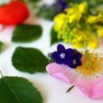 rimedi floreali