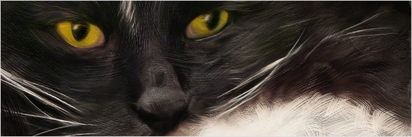 tight crop of black cat with gold eyes portrait showing texture and detail