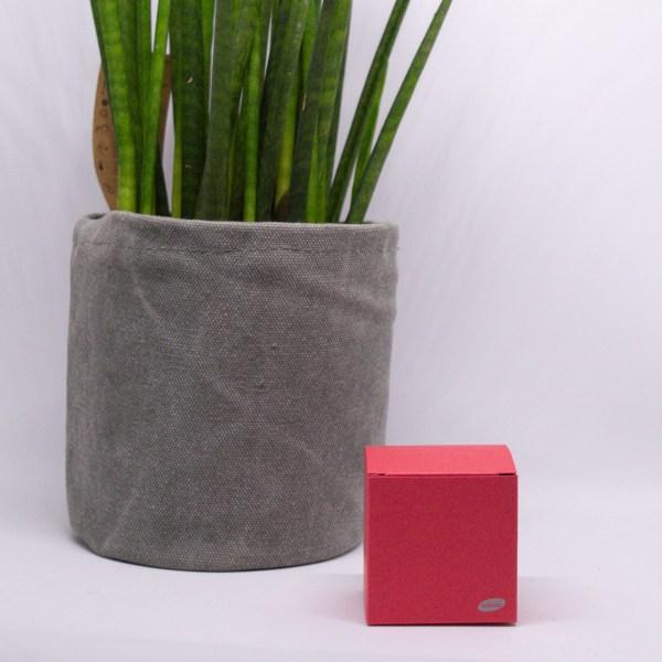 kubus koraal rood