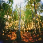 2 - JURA - Forêt de Foncine-le-Haut