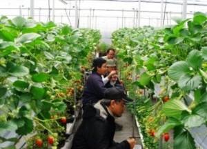 Membangun Ekonomi Pedesaan Melalui Agrowisata Studi Pariwisata