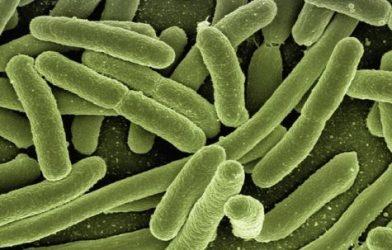 Bacteria (generic)