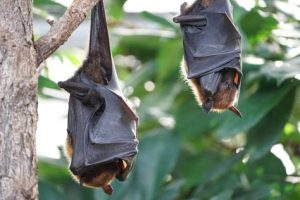 Bats hanging in tree