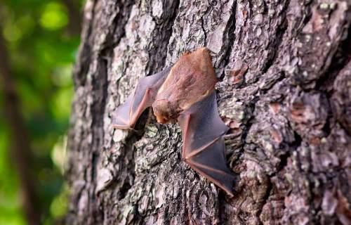 Bat on a tree