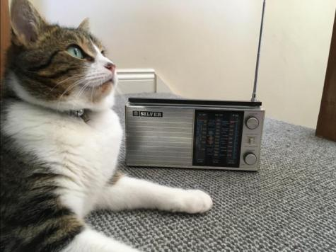 Cat listening to radio