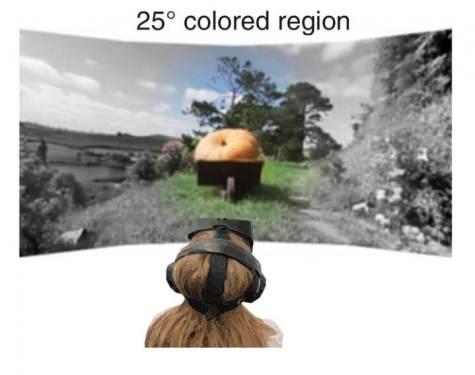 Virtual Reality Vision Study