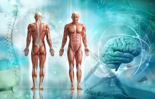 Human body, brain, spine