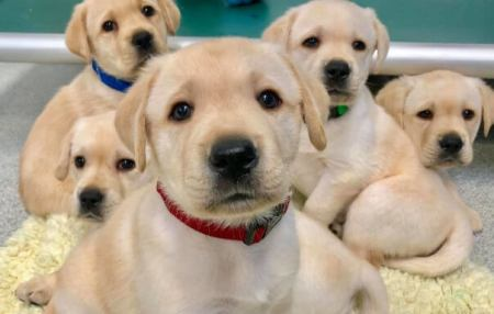 Study Says, Puppies are Born with 'Human-like' Social Skills, Wired to Communicate with People