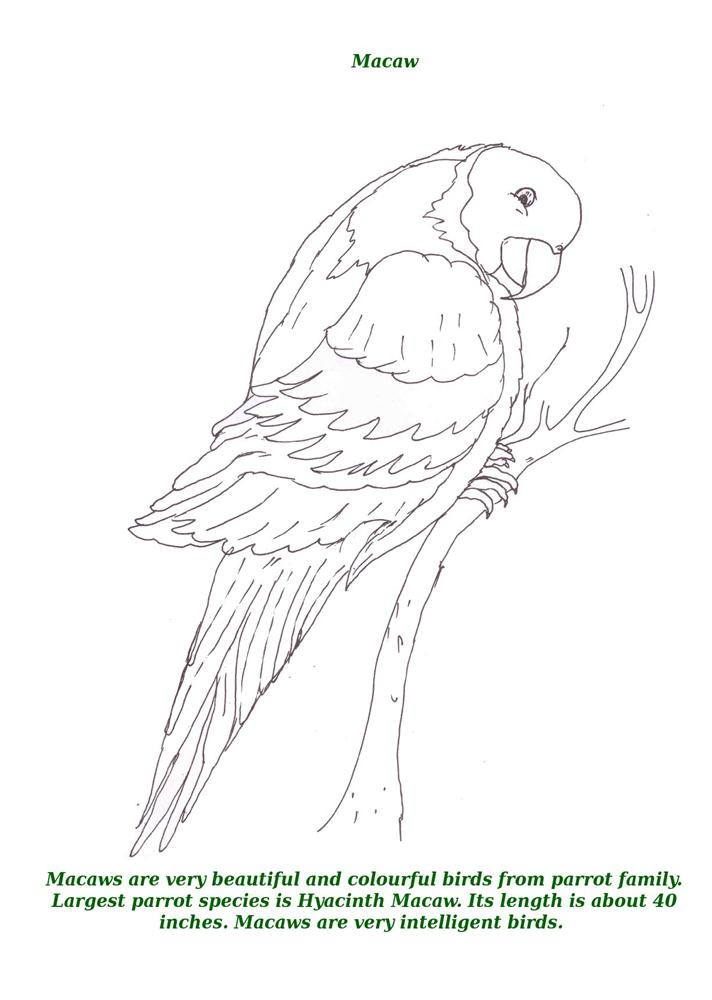 Birds Printable Coloring Page For Kids 10