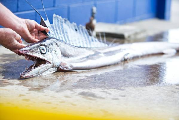 A rare Longsnouted lancetfish has been found just offshore at Fitzroy beach in New Plymouth.