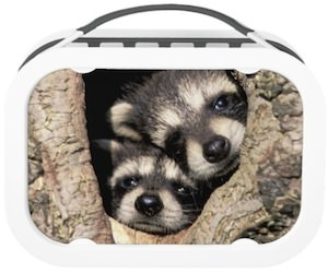 Raccoons lunch box